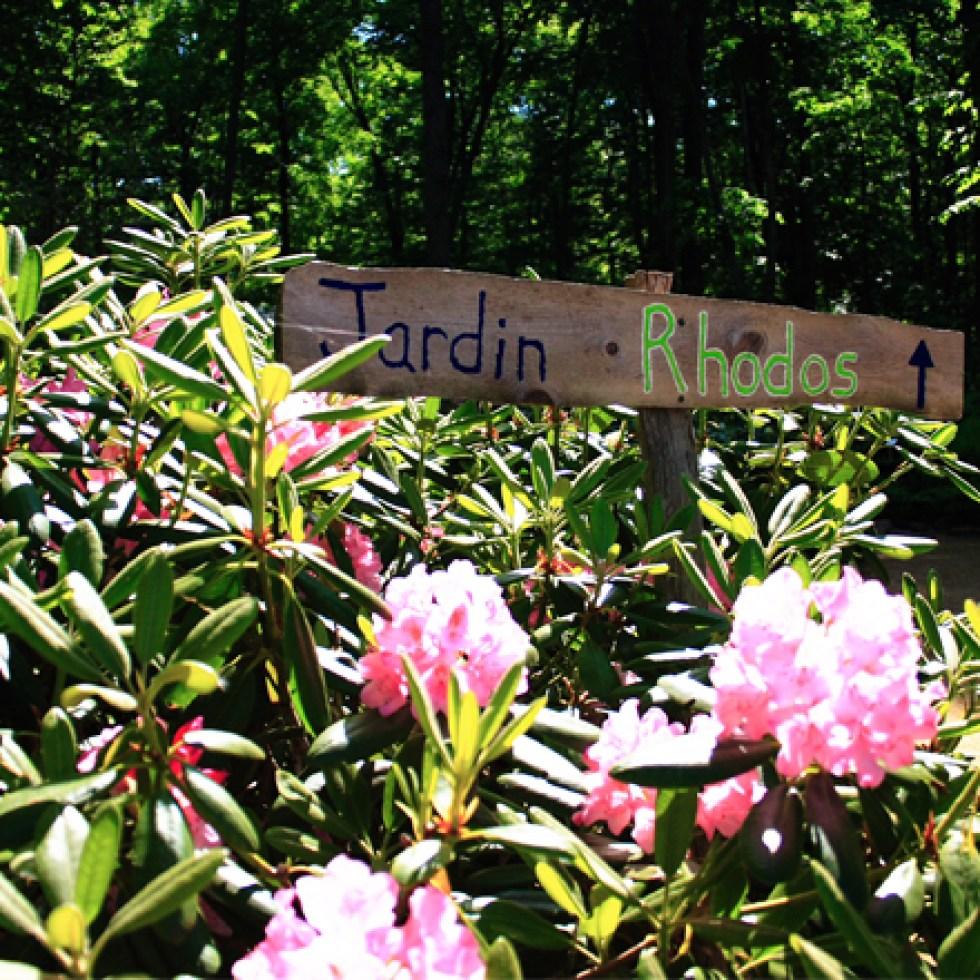 Sentiers-jardins-rhododendrons