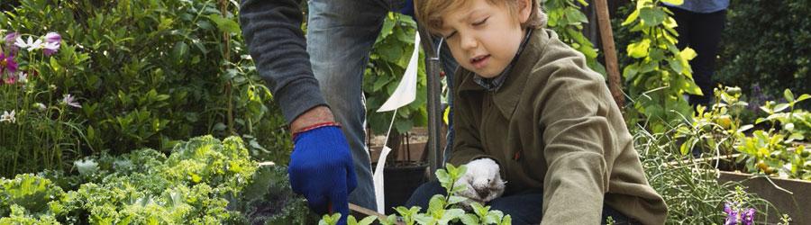 Comment Faire Des Semis Avec Les Enfants