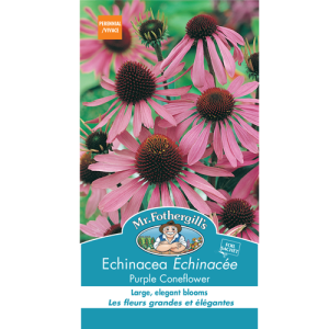 Échinacée Purple Coneflower – Mr.Fothergill's