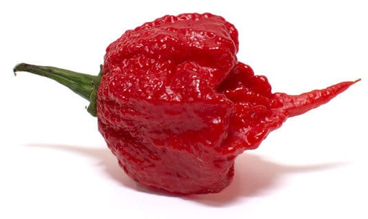 Carolina Reaper - Hottest Pepper