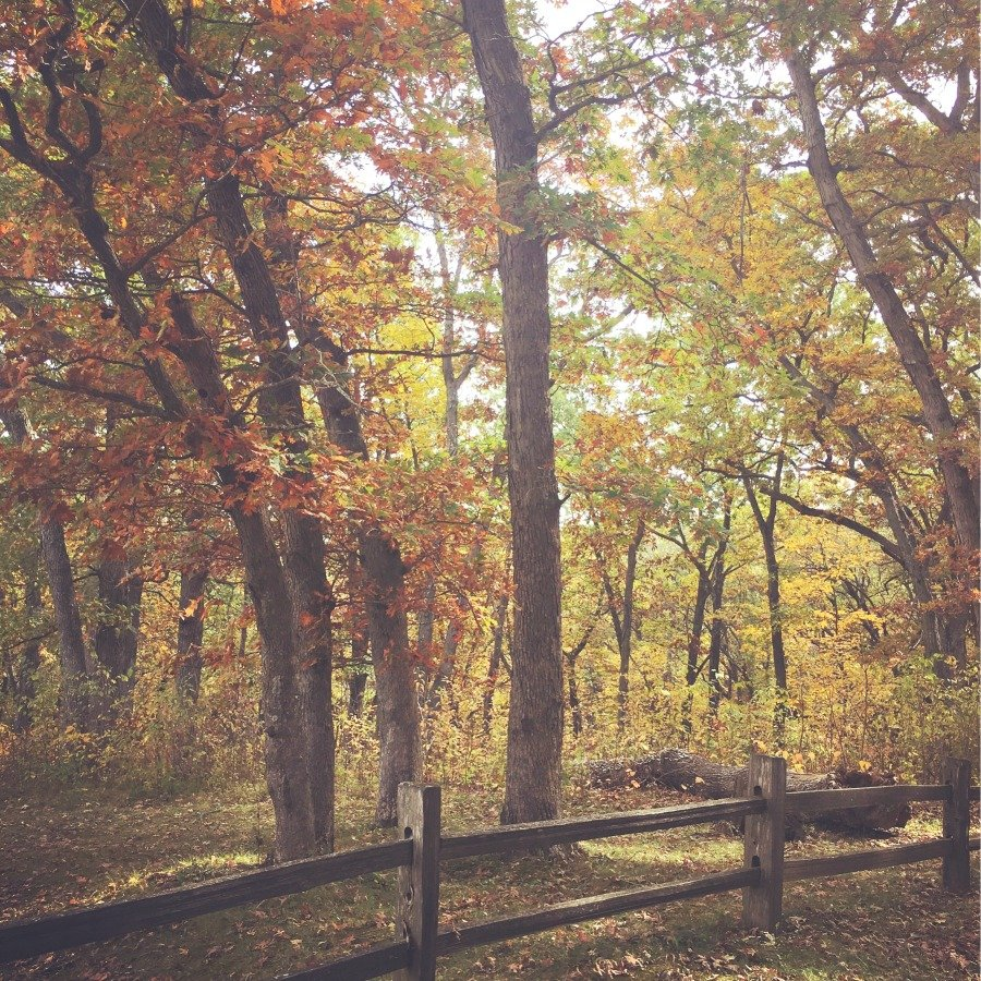 fall in love with Fall in Iowa-peppermillbnb-brilliance