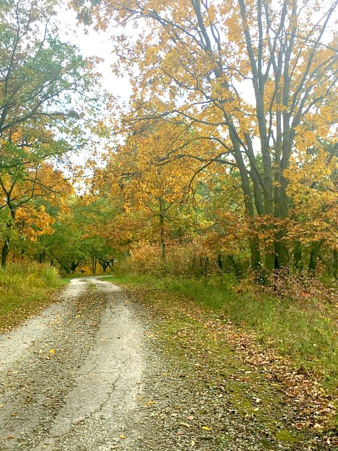 fall in love with Fall in Iowa-peppermillbnb-path