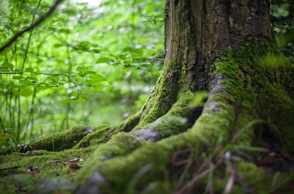1020 - environment-forest-grass-142497