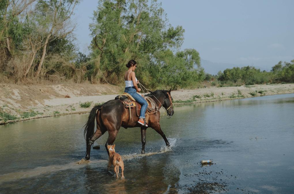 1020 - casual-wear-dog-horse-2480382