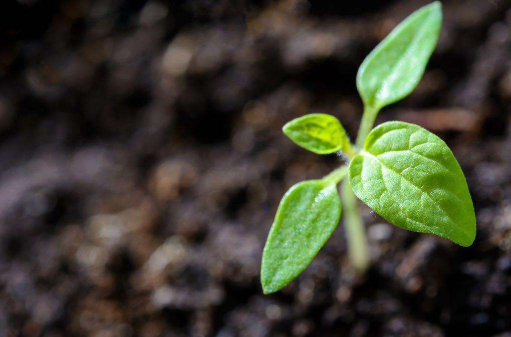 1020 - blur-close-up-cultivation-1002703