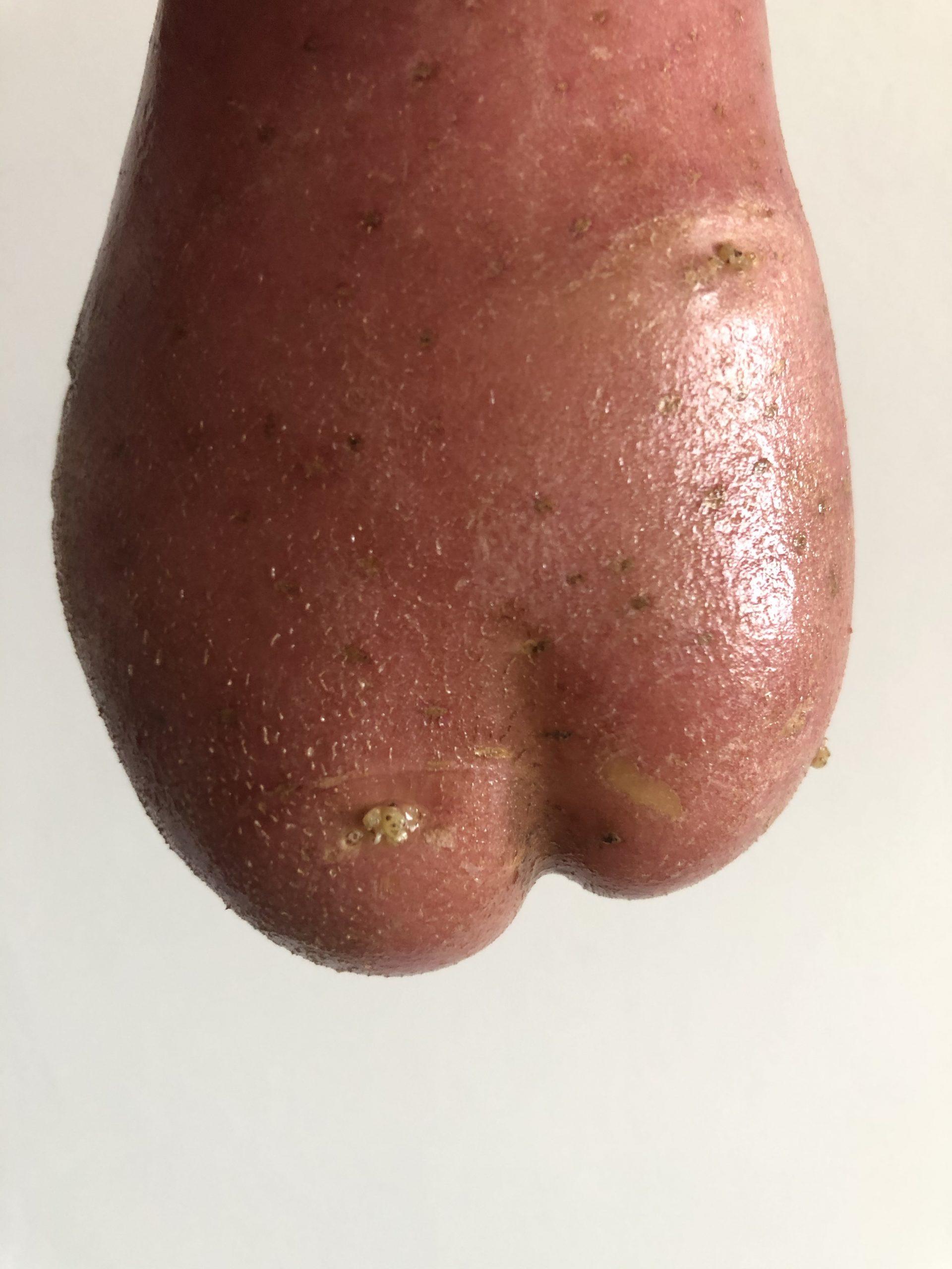 Potato Bum