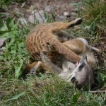 Meerkats at the Zoo - Pictures of a Meerkat Family #2