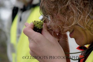 Using a handlens to observe a bryophyte (moss). Image copyright: Fiona Walsh 'Gumboots Photography' https://gumboots.carbonmade.com/
