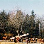 candelera 1994-3