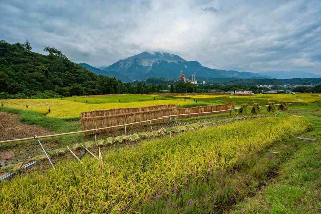 Terasaka Rice Terrace in Saitama Japan