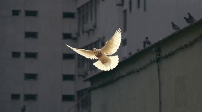 Fredsforsker giver pressen det glatte lag