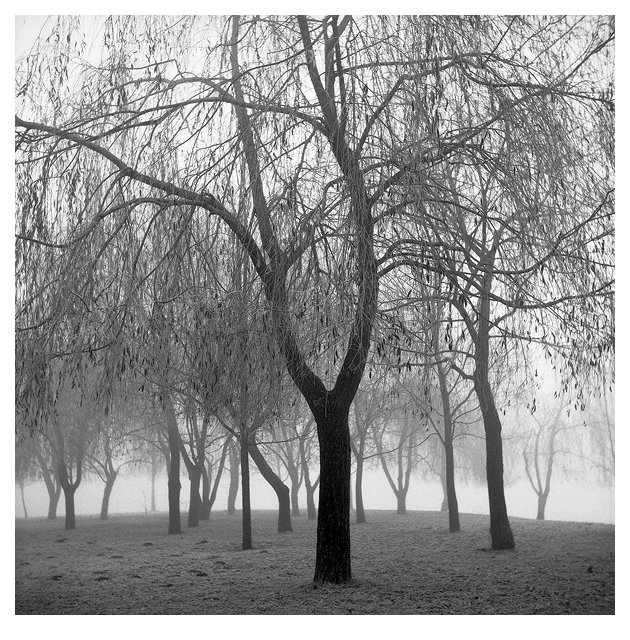 Trees In A Winter Fog - East (Zagreb, 1999.)