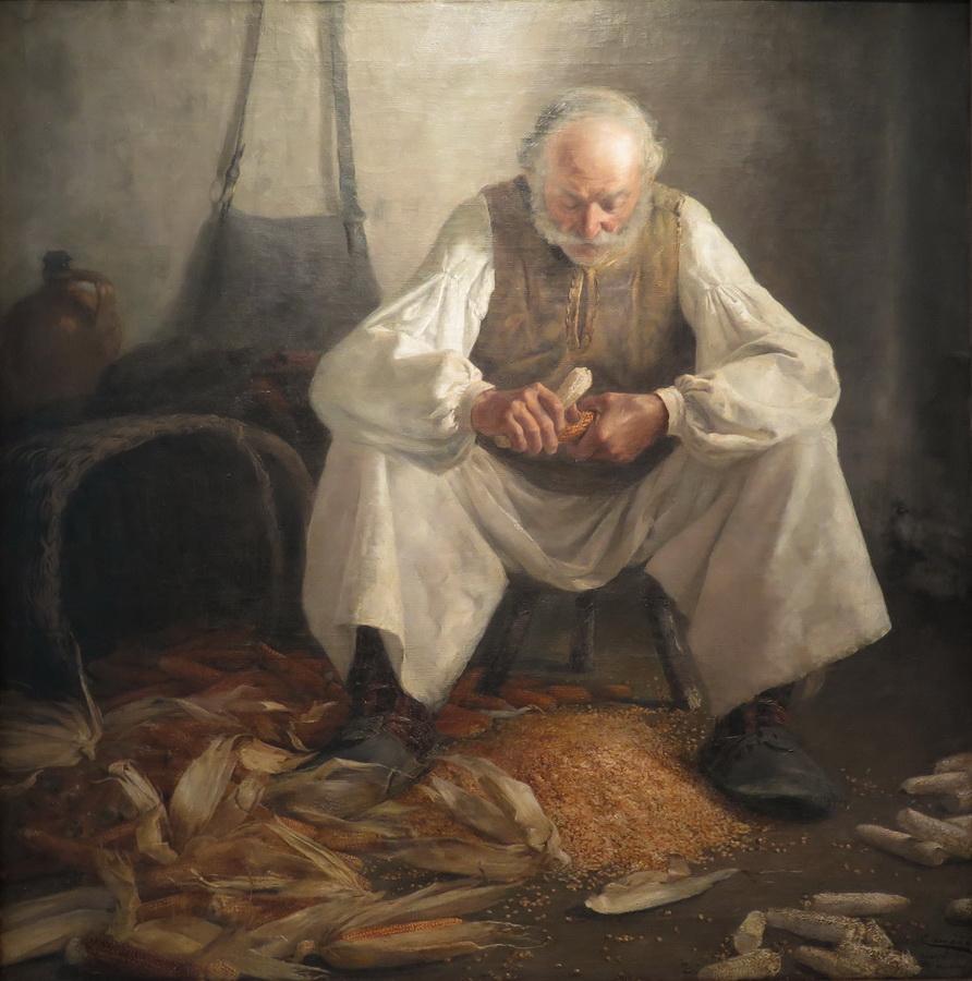 Slavonac runi kukuruz, 1891.