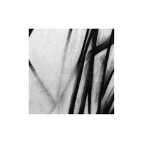 Dlakava prsa