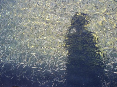 Obmanute pastrve mome zagubljenom autoportretu..., Gacka, Ribogojilište, 5.7.2007., 14:54h