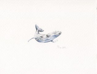 Nikolina Knežević - Mr. Whale; akvarel/drvene bojice, 2016.