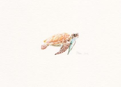 Mrs. Turtle, 14x9 cm, akvarel/drvene bojice, 2016.