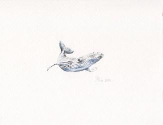 Mr. Whale, 14x9 cm, akvarel/drvene bojice, 2016.