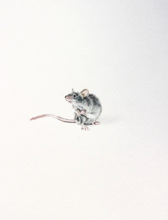 Mr. Mouse, 15x21 cm, akvarel, 2016.