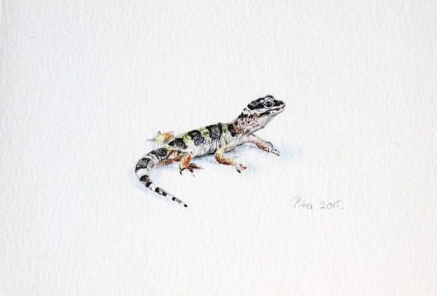 Mr. Gecko, 14x9 cm, kemijske olovke u boji, 2015.