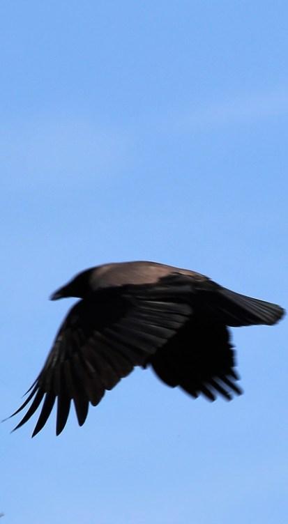 birdnarrow