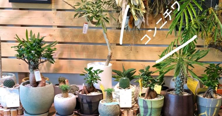 奈良で見つけた可愛い多肉植物、フラワーアレンジメントはThe Plants hanamasa