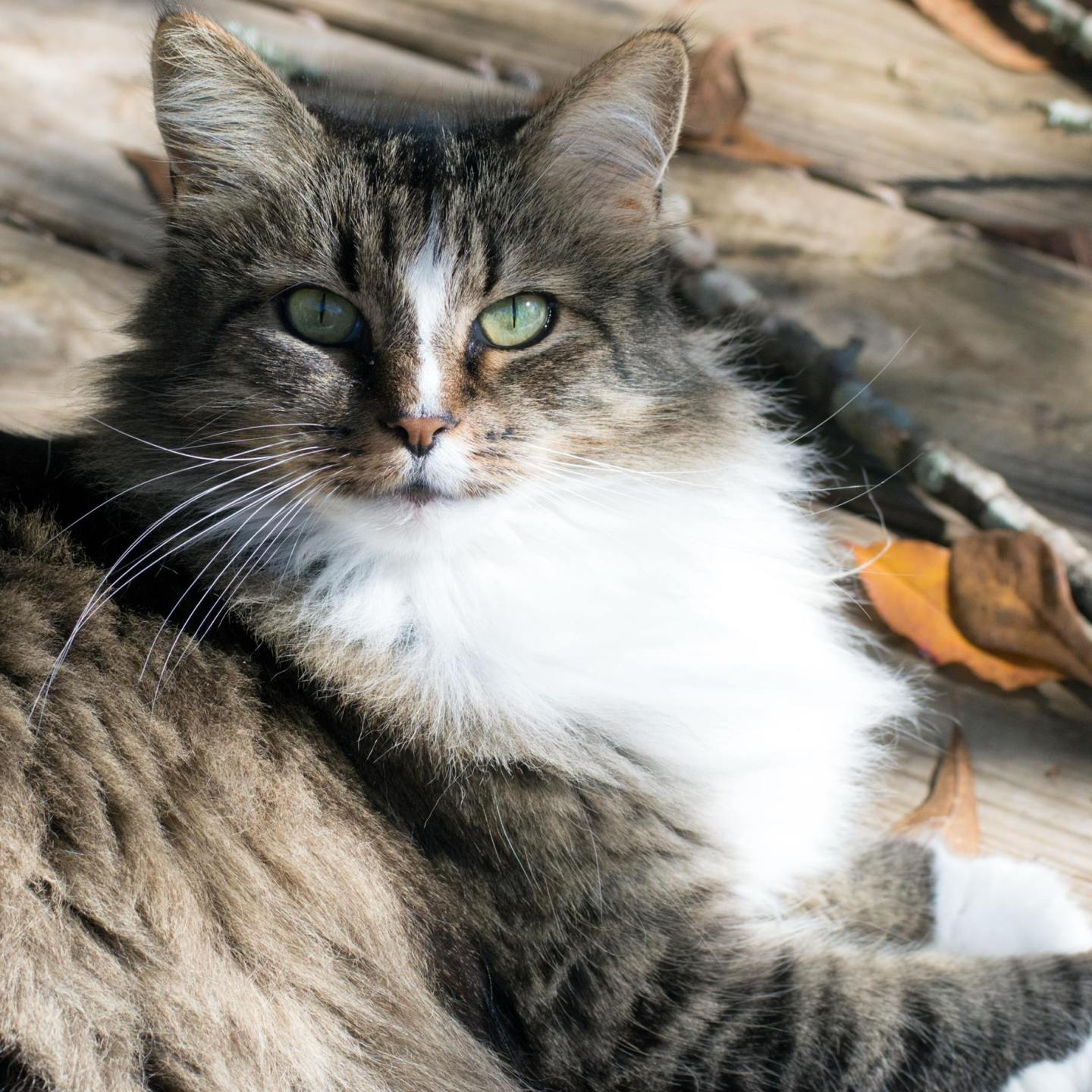 Is Cannabis Safe for Cats?