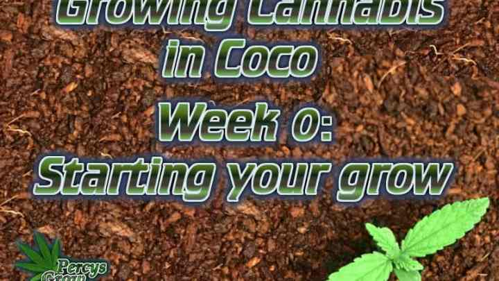 Growing cannabis in coco, how to star a grow in coco, How to grow cannabis, how to grow weed, a step by step guide to growing weed, cannabis growers forum, need help with sick plant, what's wrong with my cannabis plant, percys Grow Room, the Grow Room, percys Grow Guides, we'd growing forum, weed growers community, how to grow weed in coco, when is my cannabis plant ready for harvest, how to feed my cannabis plant, beginners guide to growing weed, how to grow weed for personal use, cannabis plant deficiency, how to germinate cannabis seeds, where to buy cannabis seeds, best weed growers website, Cannabis Growers forum, weed growers forum, How to grow legal cannabis, a step by step guide to growing weed, cannabis growing guide, tips for marijuana growers, growing cannabis plants for the first time, marijuana growers forum, marijuana growing tips, cannabis plant problems, cannabis plant help, marijuana growing expert advice