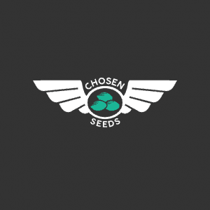 Chosen seeds, Cannabis growers forum & community, How to grow cannabis, how to grow weed, a step by step guide to growing weed, cannabis growers forum, need help with sick plant, what's wrong with my cannabis plant, percys Grow Room, the Grow Room, percys Grow Guides, we'd growing forum, weed growers community, how to grow weed in coco, when is my cannabis plant ready for harvest, how to feed my cannabis plant, beginners guide to growing weed, how to grow weed for personal use, cannabis plant deficiency, how to germinate cannabis seeds, where to buy cannabis seeds, best weed growers website