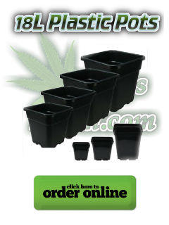 18l plastic pot for growing cannabis, Cannabis growers forum & community, How to grow cannabis, how to grow weed, a step by step guide to growing weed, cannabis growers forum, need help with sick plant, what's wrong with my cannabis plant, percys Grow Room, the Grow Room, percys Grow Guides, we'd growing forum, weed growers community, how to grow weed in coco, when is my cannabis plant ready for harvest, how to feed my cannabis plant, beginners guide to growing weed, how to grow weed for personal use, cannabis plant deficiency, how to germinate cannabis seeds, where to buy cannabis seeds, best weed growers website