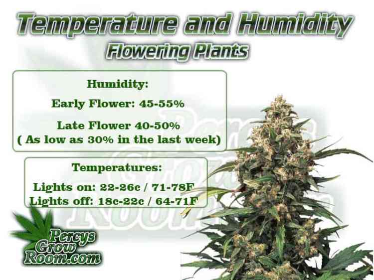 Temperature and humidity for flowering cannabis plant, Cannabis growers forum & community, How to grow cannabis, how to grow weed, a step by step guide to growing weed, cannabis growers forum, need help with sick plant, what's wrong with my cannabis plant, percys Grow Room, the Grow Room, percys Grow Guides, we'd growing forum, weed growers community, how to grow weed in coco, when is my cannabis plant ready for harvest, how to feed my cannabis plant, beginners guide to growing weed, how to grow weed for personal use, cannabis plant deficiency, how to germinate cannabis seeds, where to buy cannabis seeds, best weed growers website