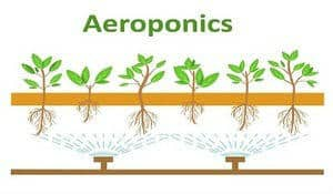 aeroponics, how to grow cannabis with aeroponics, Cannabis growers forum & community, How to grow cannabis, how to grow weed, a step by step guide to growing weed, cannabis growers forum, need help with sick plant, what's wrong with my cannabis plant, percy's Grow Room, the Grow Room, Cannabis Grow Guides, weed growing forum, weed growers community, how to grow weed in coco, when is my cannabis plant ready for harvest, how to feed my cannabis plant, beginners guide to growing weed, how to grow weed for personal use, cannabis plant deficiency, how to germinate cannabis seeds, where to buy cannabis seeds, best weed growers website, Learn to grow cannabis, is it easy to grow weed,