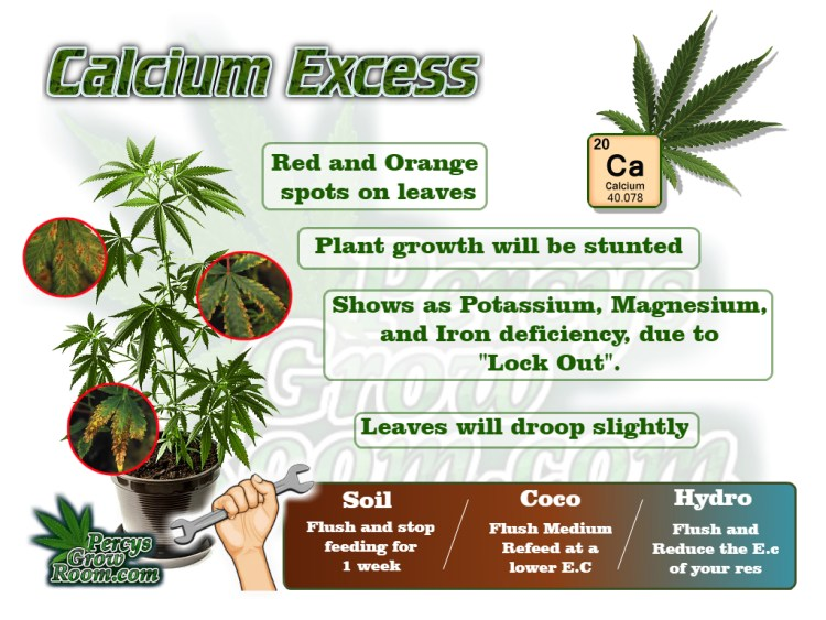 Macro and Micro Nutrients, Symptoms of calcium excess in a cannabis plant, cannabis plant deficiency, how to fix a cannabis plant deficiency, nuit burn on my cannabis plant, nuit burn on a cannabis plant, how to fix nuit burn on a cannabis plant, cannabis plant problems, how to fix a sick cannabis plant, Cannabis growers forum & community, How to grow cannabis, how to grow weed, a step by step guide to growing weed, cannabis growers forum, need help with sick plant, what's wrong with my cannabis plant, percys Grow Room, the Grow Room, percys Grow Guides, we'd growing forum, weed growers community, how to grow weed in coco, when is my cannabis plant ready for harvest, how to feed my cannabis plant, beginners guide to growing weed, how to grow weed for personal use, cannabis plant deficiency, how to germinate cannabis seeds, where to buy cannabis seeds, best weed growers website