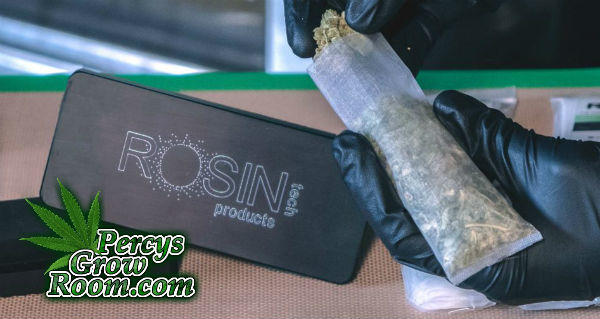 rosin bag full of cannabis, rosin tech products, Cannabis growers forum & community, How to grow cannabis, how to grow weed, a step by step guide to growing weed, cannabis growers forum, need help with sick plant, what's wrong with my cannabis plant, percys Grow Room, the Grow Room, percys Grow Guides, we'd growing forum, weed growers community, how to grow weed in coco, when is my cannabis plant ready for harvest, how to feed my cannabis plant, beginners guide to growing weed, how to grow weed for personal use, cannabis plant deficiency, how to germinate cannabis seeds, where to buy cannabis seeds, best weed growers website