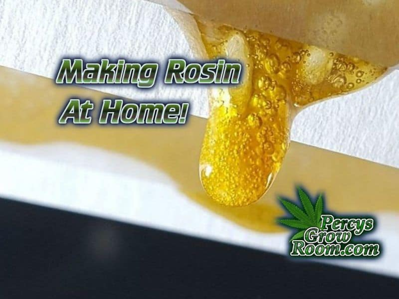 How to Make Rosin Easily at Home - Percys Grow Room