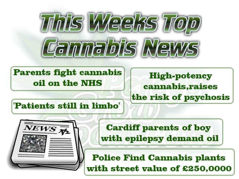 this weeks top canabis news feature images, news in cannabis, top news in cannabis this week, cannabis terminology, cannabis slang, Cannabis growers forum & community, How to grow cannabis, how to grow weed, a step by step guide to growing weed, cannabis growers forum, need help with sick plant, what's wrong with my cannabis plant, percy's Grow Room, the Grow Room, Cannabis Grow Guides, weed growing forum, weed growers community, how to grow weed in coco, when is my cannabis plant ready for harvest, how to feed my cannabis plant, beginners guide to growing weed, how to grow weed for personal use, cannabis plant deficiency, how to germinate cannabis seeds, where to buy cannabis seeds, best weed growers website, Learn to grow cannabis, is it easy to grow weed