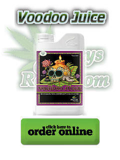 advanced nutrients voodoo juice, Cannabis growers forum & community, How to grow cannabis, how to grow weed, a step by step guide to growing weed, cannabis growers forum, need help with sick plant, what's wrong with my cannabis plant, percy's Grow Room, the Grow Room, Cannabis Grow Guides, weed growing forum, weed growers community, how to grow weed in coco, when is my cannabis plant ready for harvest, how to feed my cannabis plant, beginners guide to growing weed, how to grow weed for personal use, cannabis plant deficiency, how to germinate cannabis seeds, where to buy cannabis seeds, best weed growers website, Learn to grow cannabis, is it easy to grow weed