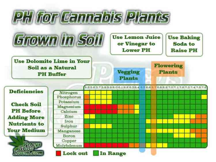 ph for cannabis plants grown in soil, Ph for plants in soil, cannabis plants, Vegging plants 6.5 flowering plants 6.7, cannabis plant ph chart for soil, Cannabis growers forum & community, How to grow cannabis, how to grow weed, a step by step guide to growing weed, cannabis growers forum, need help with sick plant, what's wrong with my cannabis plant, percy's Grow Room, the Grow Room, Cannabis Grow Guides, weed growing forum, weed growers community, how to grow weed in coco, when is my cannabis plant ready for harvest, how to feed my cannabis plant, beginners guide to growing weed, how to grow weed for personal use, cannabis plant deficiency, how to germinate cannabis seeds, where to buy cannabis seeds, best weed growers website, Learn to grow cannabis, is it easy to grow weed,