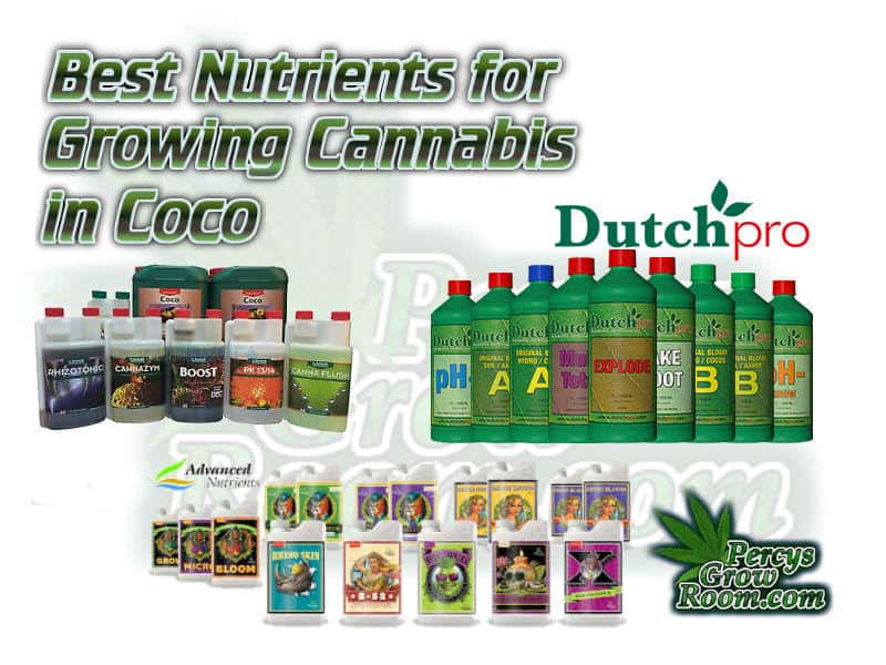 Best nutrients for growing cannabis in coco, Dutch pro, Canna, Advanced Nutirents, What nutrients to use to grow cannabis,