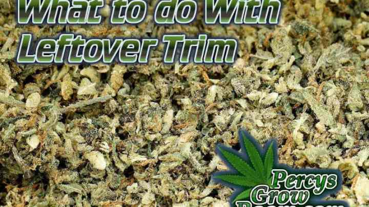 What to do with left over cannabis trim, how to use trim from harvest, what to do with tip leaf, cannabis extracts, How to grow cannabis, how to grow weed, a step by step guide to growing weed, cannabis growers forum, need help with sick plant, what's wrong with my cannabis plant, percys Grow Room, the Grow Room, percys Grow Guides, we'd growing forum, weed growers community, how to grow weed in coco, when is my cannabis plant ready for harvest, how to feed my cannabis plant, beginners guide to growing weed, how to grow weed for personal use, cannabis plant deficiency, how to germinate cannabis seeds, where to buy cannabis seeds, best weed growers website, Cannabis Growers forum, weed growers forum, How to grow legal cannabis, a step by step guide to growing weed, cannabis growing guide, tips for marijuana growers, growing cannabis plants for the first time, marijuana growers forum, marijuana growing tips, cannabis plant problems, cannabis plant help, marijuana growing expert advice