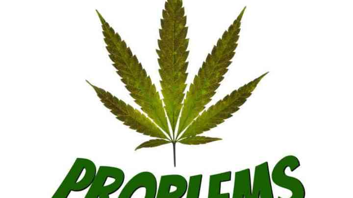 Help diagnosing a cannabis plant problem, plant deficiency guides, grow cannabis, how to grow weed, a step by step guide to growing weed, cannabis growers forum, need help with sick plant, what's wrong with my cannabis plant, percys Grow Room, the Grow Room, percys Grow Guides, we'd growing forum, weed growers community, how to grow weed in coco, when is my cannabis plant ready for harvest, how to feed my cannabis plant, beginners guide to growing weed, how to grow weed for personal use, cannabis plant deficiency, how to germinate cannabis seeds, where to buy cannabis seeds, best weed growers website, Cannabis Growers forum, weed growers forum, How to grow legal cannabis, a step by step guide to growing weed, cannabis growing guide, tips for marijuana growers, growing cannabis plants for the first time, marijuana growers forum, marijuana growing tips, cannabis plant problems, cannabis plant help, marijuana growing expert advice