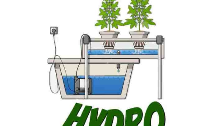 Guides on growing cannabis in hydroponics, grow cannabis, how to grow weed, a step by step guide to growing weed, cannabis growers forum, need help with sick plant, what's wrong with my cannabis plant, percys Grow Room, the Grow Room, percys Grow Guides, we'd growing forum, weed growers community, how to grow weed in coco, when is my cannabis plant ready for harvest, how to feed my cannabis plant, beginners guide to growing weed, how to grow weed for personal use, cannabis plant deficiency, how to germinate cannabis seeds, where to buy cannabis seeds, best weed growers website, Cannabis Growers forum, weed growers forum, How to grow legal cannabis, a step by step guide to growing weed, cannabis growing guide, tips for marijuana growers, growing cannabis plants for the first time, marijuana growers forum, marijuana growing tips, cannabis plant problems, cannabis plant help, marijuana growing expert advice