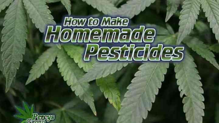 how to make home made pesticides, pesticdies for killing bugs on a cannabis plant, grow cannabis, how to grow weed, a step by step guide to growing weed, cannabis growers forum, need help with sick plant, what's wrong with my cannabis plant, percys Grow Room, the Grow Room, percys Grow Guides, we'd growing forum, weed growers community, how to grow weed in coco, when is my cannabis plant ready for harvest, how to feed my cannabis plant, beginners guide to growing weed, how to grow weed for personal use, cannabis plant deficiency, how to germinate cannabis seeds, where to buy cannabis seeds, best weed growers website, Cannabis Growers forum, weed growers forum, How to grow legal cannabis, a step by step guide to growing weed, cannabis growing guide, tips for marijuana growers, growing cannabis plants for the first time, marijuana growers forum, marijuana growing tips, cannabis plant problems, cannabis plant help, marijuana growing expert advice