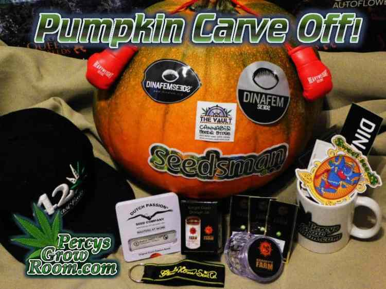 pumpkin carving competition,