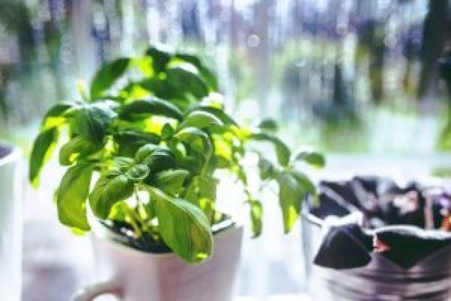 11 remedios naturales para la presión alta