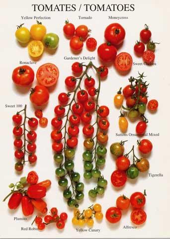 beneficios do tomate-variedades