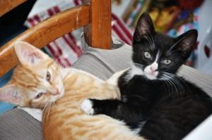 Chats-Minus et Cortex