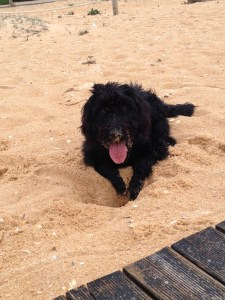 I love digging on the beach!