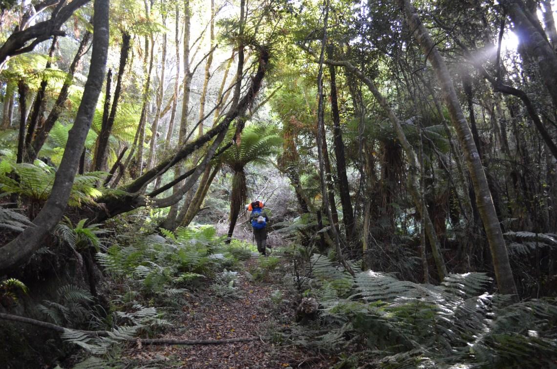 las wędrówka Nowa Zelandia plecak włóczykij