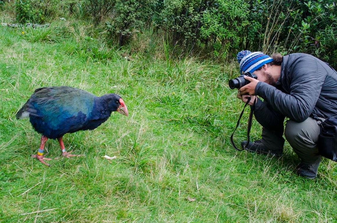 Nowozelandzkie gatunki zwierząt